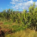 Terrain agricole Agadir